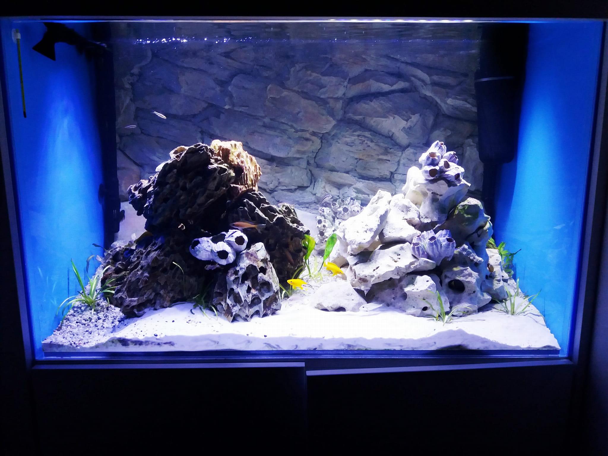 Panel Led 80cm 30w Do Akwarium Morskiego