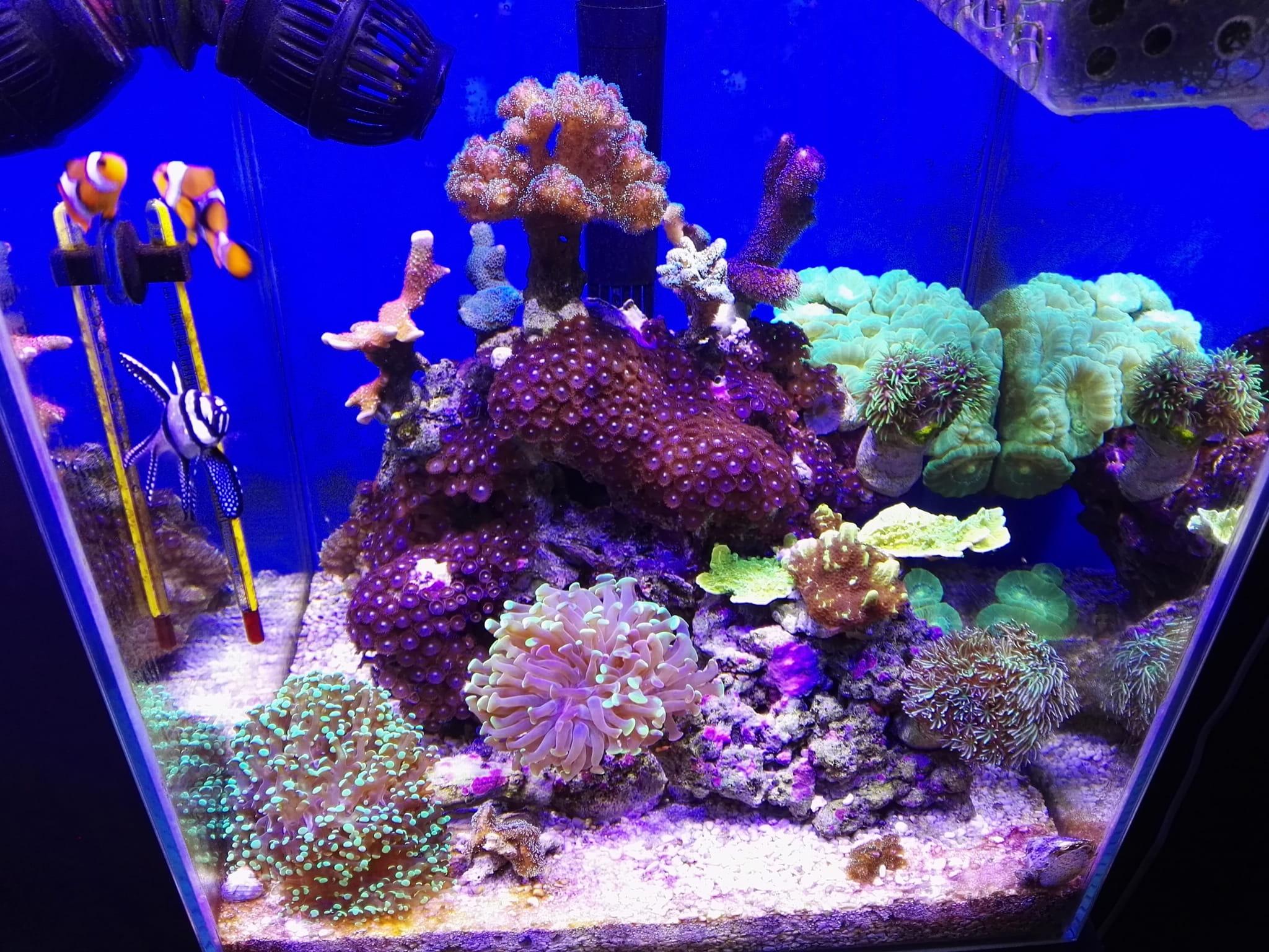 Panel Led 20x1w Do Akwarium Morskiego